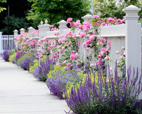 Beautiful Plants You Can Grow Instead Of A Fence
