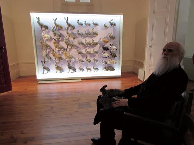 recriação de Charles Darwin junto à uma prateleria de coelhos empalhados na Galeria da Diversidade