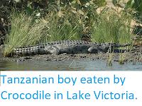 https://sciencythoughts.blogspot.com/2019/10/tanzanian-boy-eaten-by-crocodile-in.html