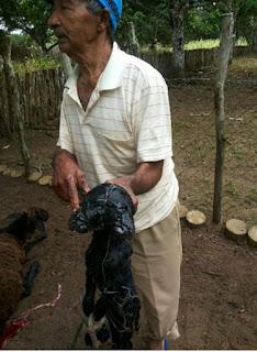 Ovelha nasce com duas cabeças em zona rural de município e produtor leva o maior susto