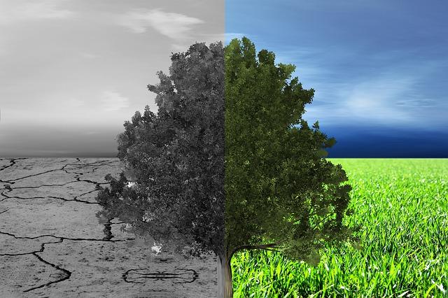 Arvore_verde_e_com_efeito_estufa
