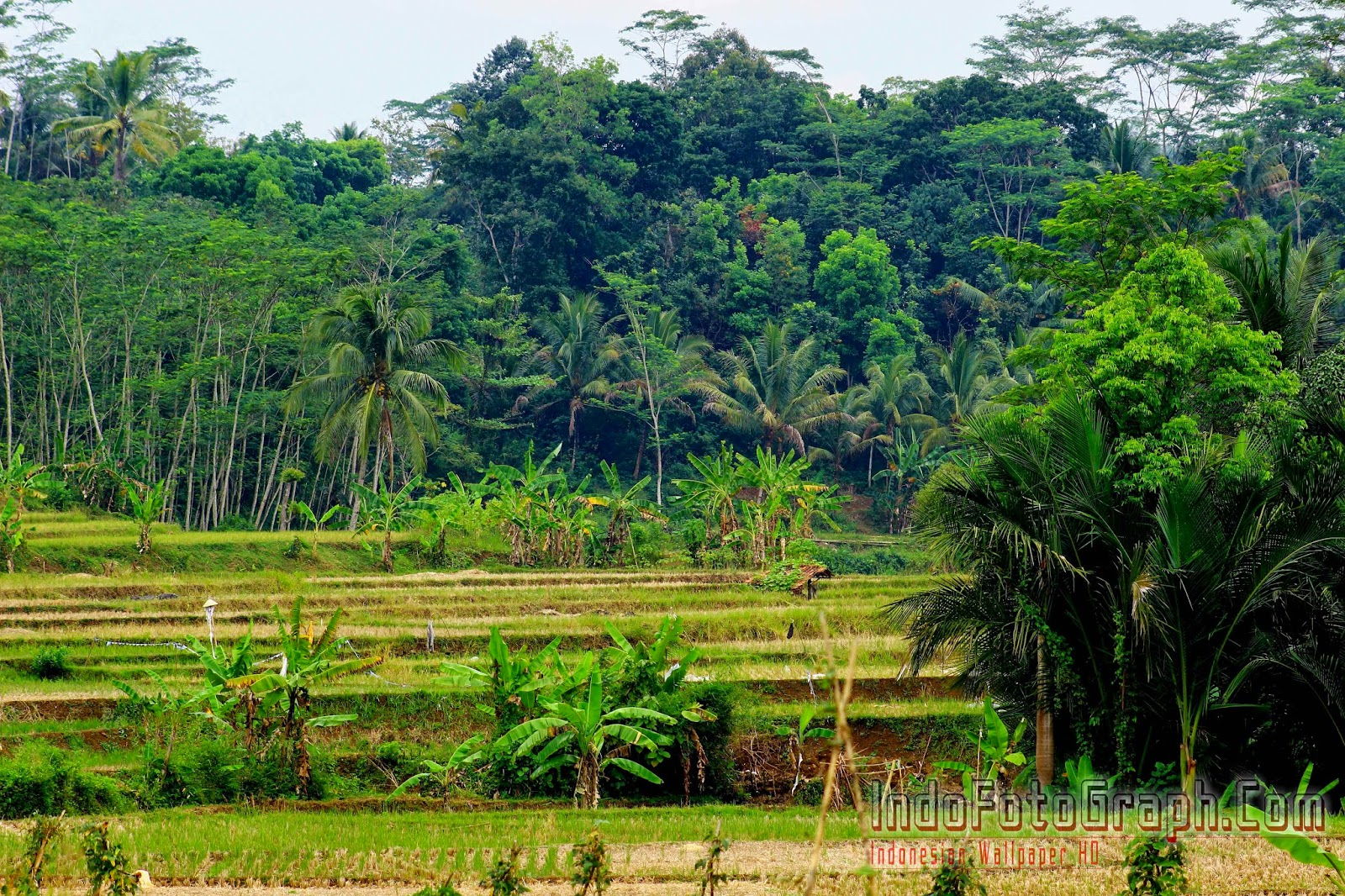Download Wallpaper Pemandangan Alam Indonesia IndoFotographCom