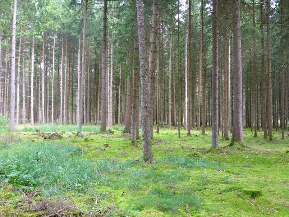 Лес, деревья, трава