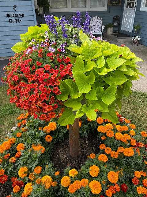 Photo of a small flower bed with marigolds & a tub on a pedestal with calibrachoa, salvia, sweet potato vines and supertunia.