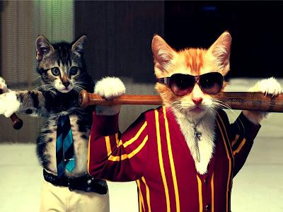 due gatti che giocano a baseball