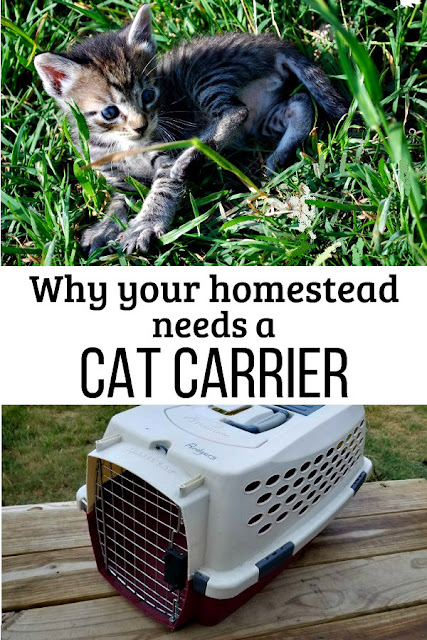 Why you must have a pet carrier on your homestead, even if the only cat you have is a barn cat.