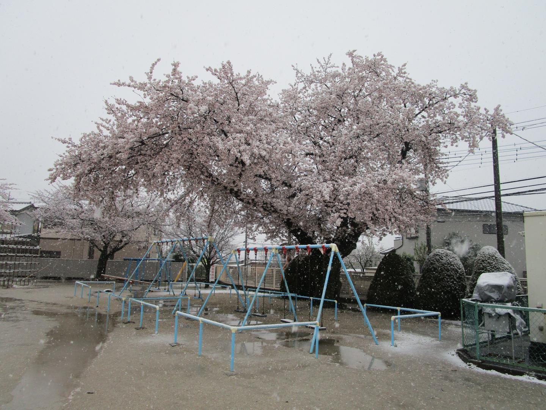 3 月 29 日 天気