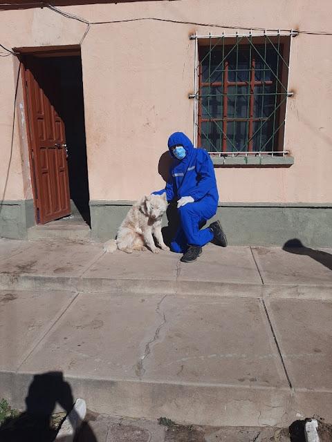 """Foto: Bioseguridad, der Husky Siberiano, 's """"Wölfle"""" braucht die allerdings nicht."""