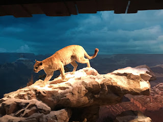 Cougar Grand Canyon Disneyland Railroad Diorama