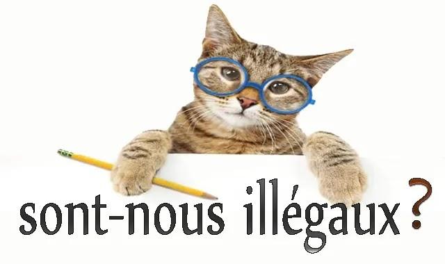 chat bengal interdit belgique