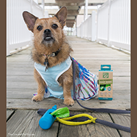 Only Natural Pet eco friendly dog poop bags and dispenser Review