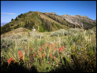 Indian Paintbrush on the top of the Cascade Saddle
