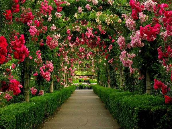 Amazing Walkway Arch Blooming Roses