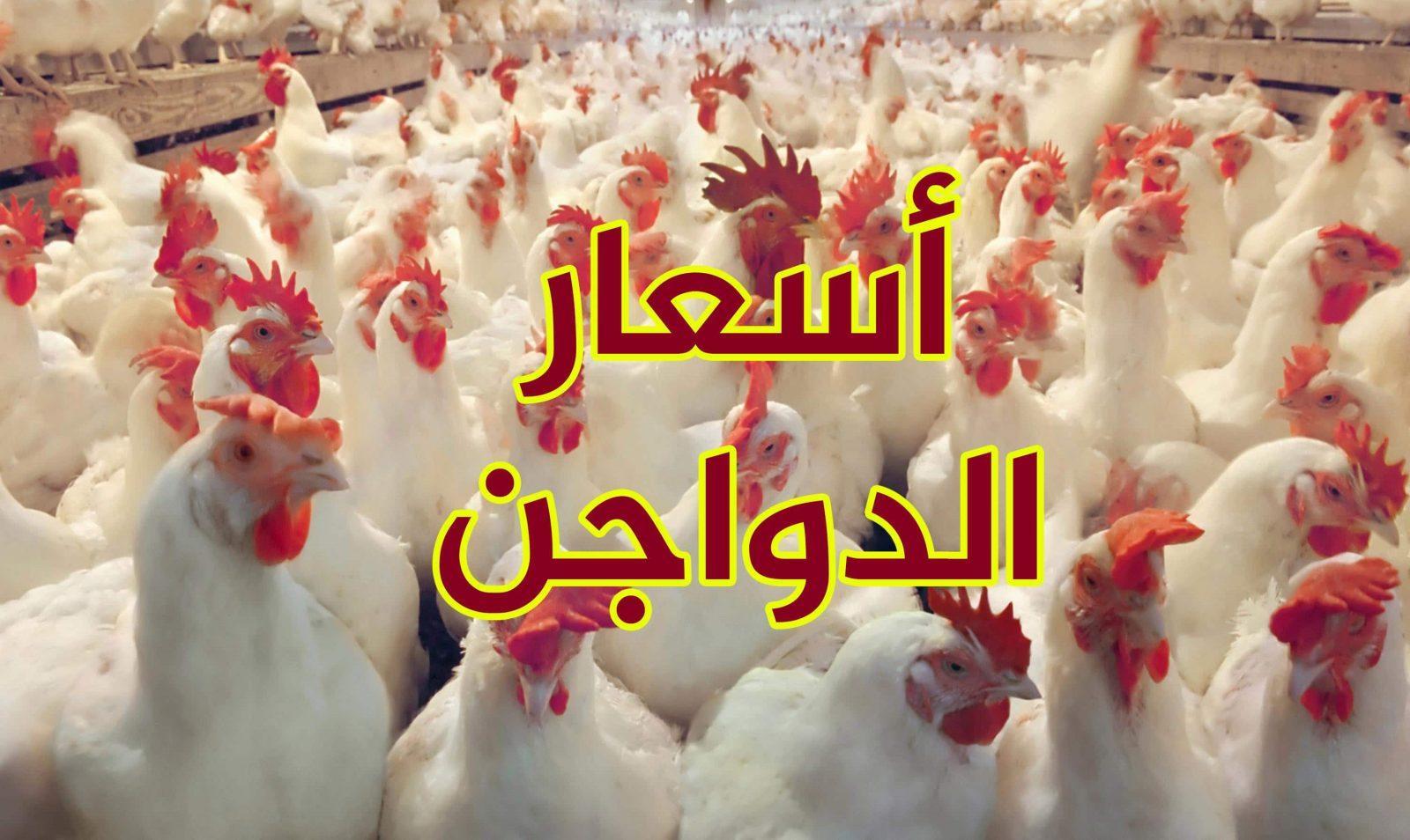 أسعار الفراخ البيضاء اليوم في مصر 2020