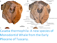 http://sciencythoughts.blogspot.com/2019/09/casatia-thermophila-new-species-of.html