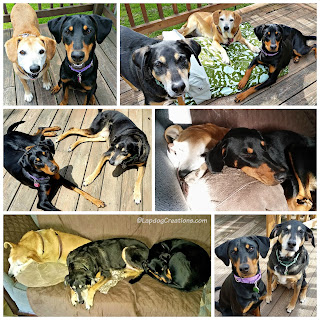 3 rescued mixed breed dogs, puppy and senior