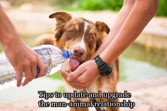 Tips to update and upgrade the man-animal relationship