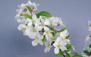 http://fotobabij.blogspot.com/2015/05/jabon-jagodowa-jabon-syberyjska-kwiaty.html