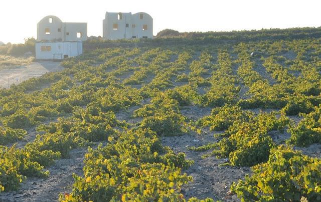 Passeio pelos vinhedos, Santorini