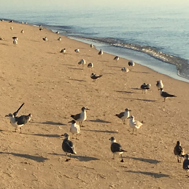 Nude Beach Latvia