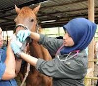 macam macam penyakit yang biasa menyerang ternak kuda