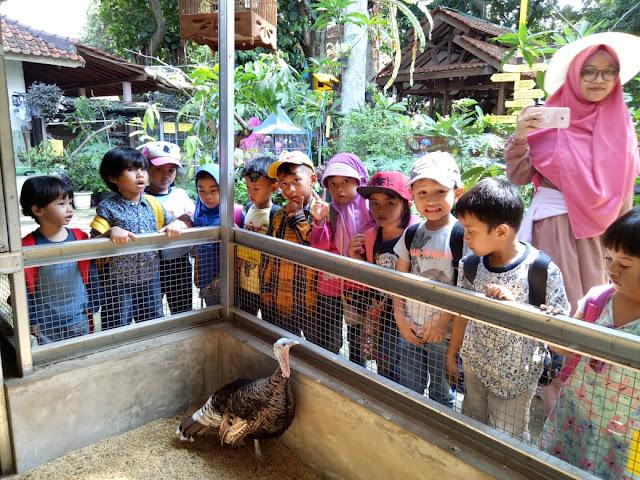mini zoo sekolah