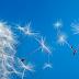 Alergias respiratórias: como se proteger durante a primavera?
