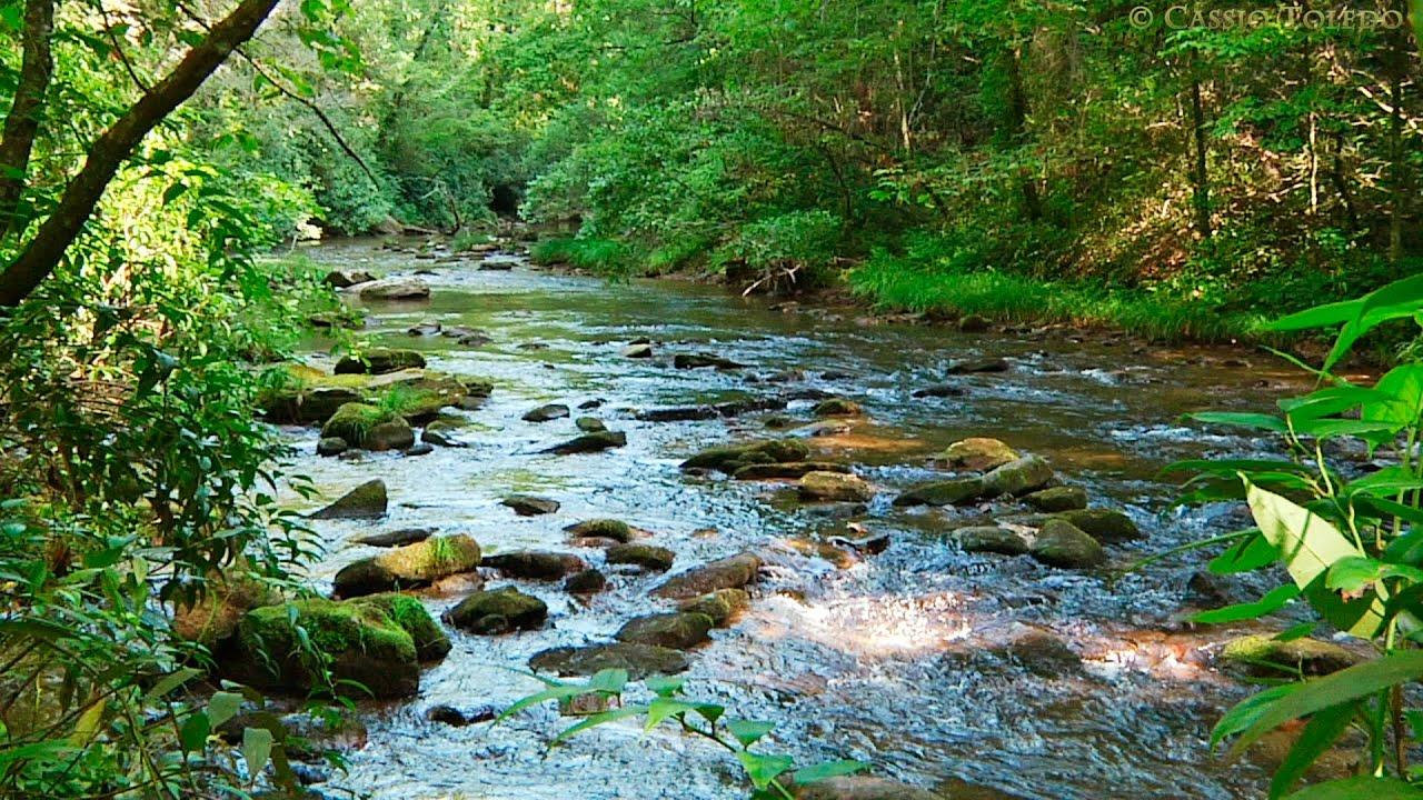 https://www.notasrosas.com/Cuando la naturaleza se expresa a través de su fauna y su flora, melodías, colores, olores y sabores