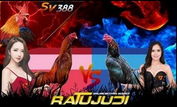 Agen Judi Sv388 Indonesia