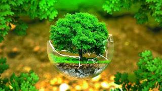 çevre sağlığı bölümü nedir