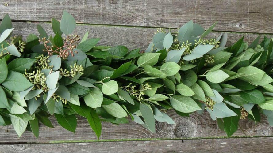 ljekovita svojstva eukaliptusa