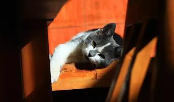 8 razones por las que mi gato puede estar enfermo del estómago