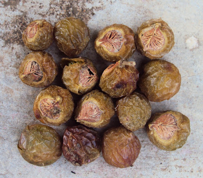 8-10 Natural soapnuts that can be used as a detergent substitute