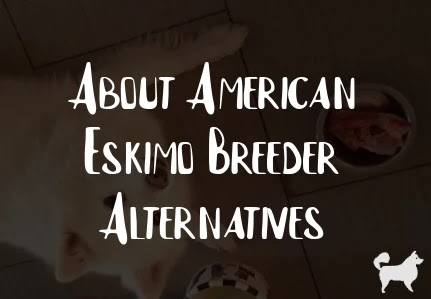 About American Eskimo Breeder Alternatives
