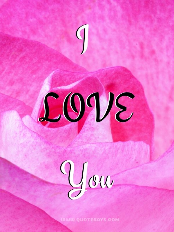 I Love You Images with Pink Rose Petals