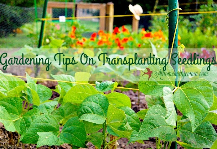 Gardening Under A Crabapple Tree