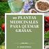 10 Plantas Medicinales para quemar grasas.