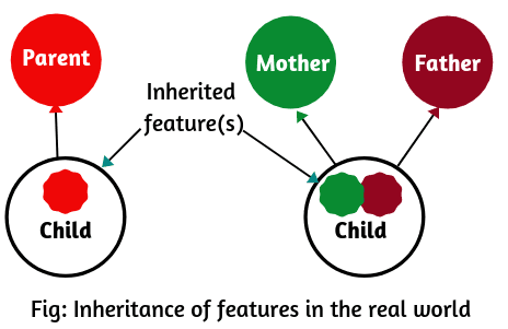 Realtime example of inheritance in Java.