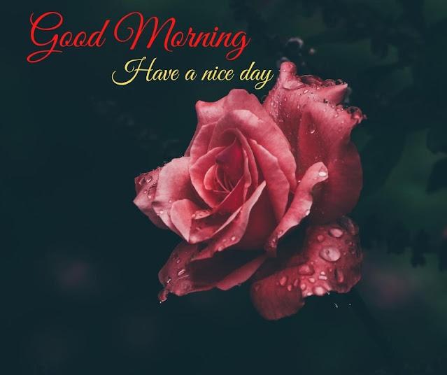 Heartwarming Good Morning Images