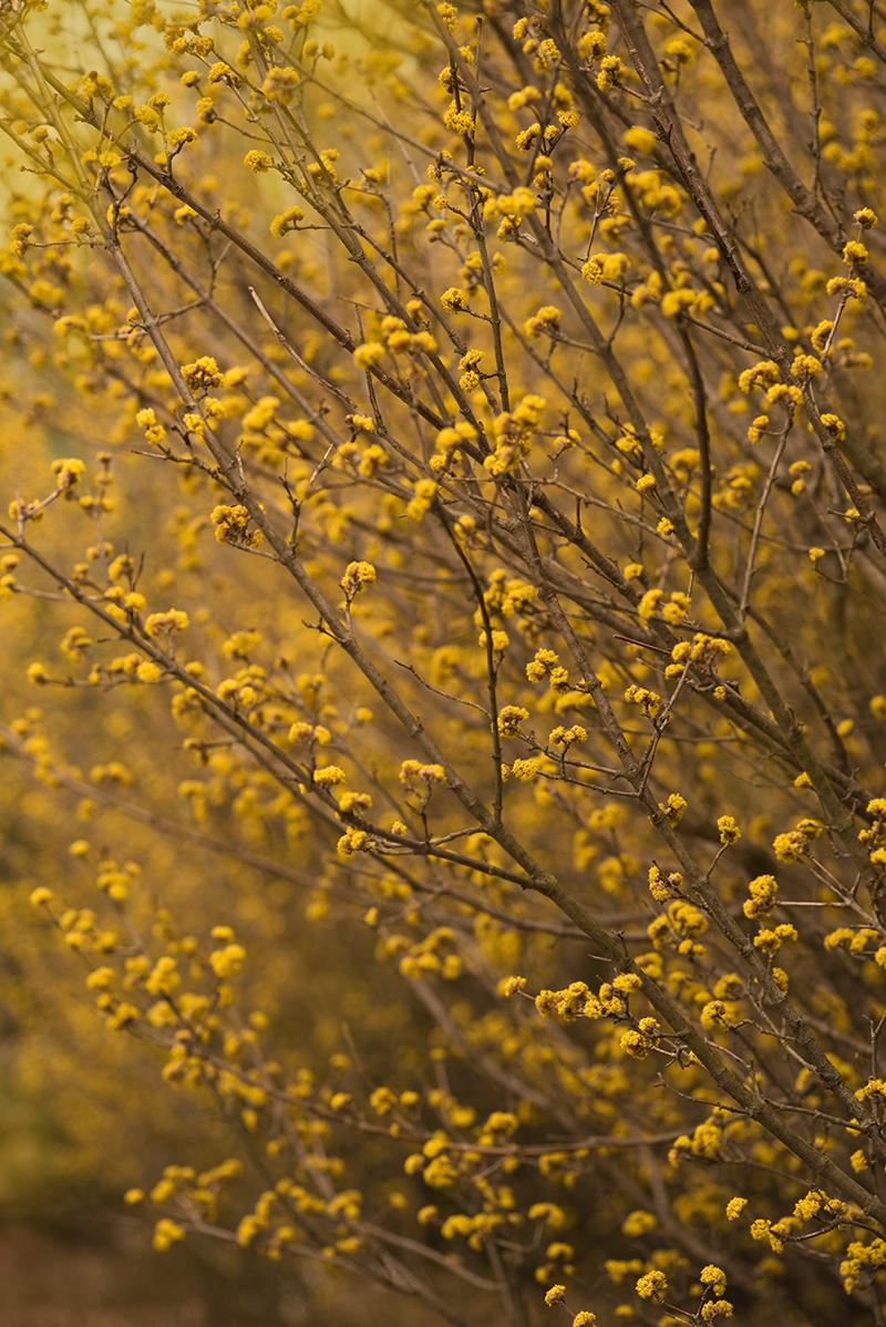 Spring landscape - Simi Jois