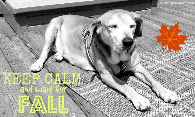Senior hound dog with eyes closed