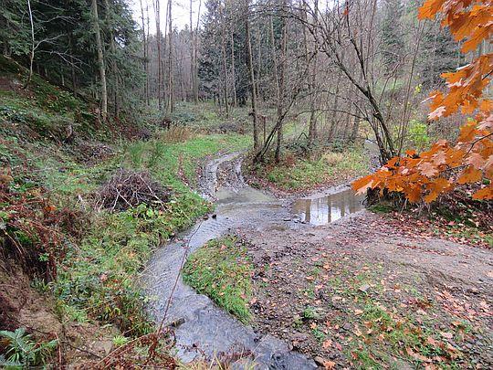 Potok przecina drogę.