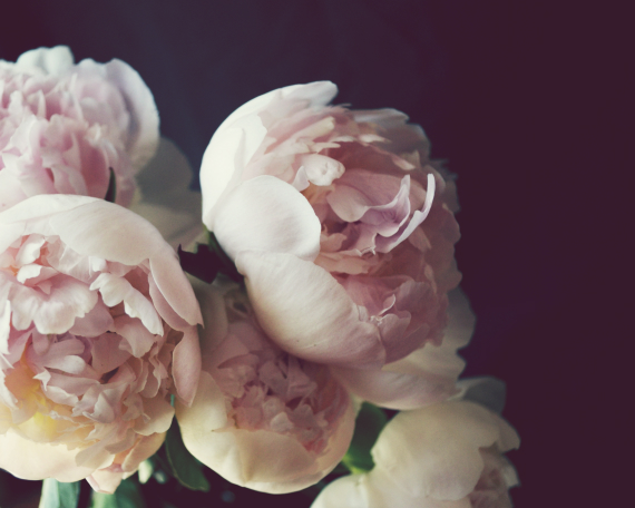 Garden by the sea   Photography blog by Lupen Grainne  Pink Peony     Pink Peony Flowers