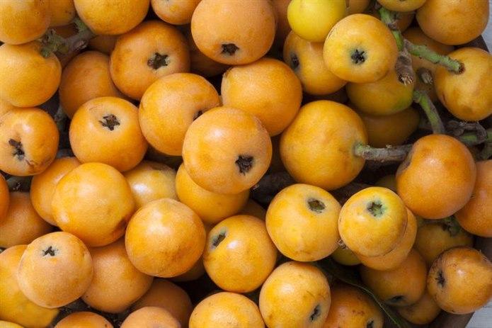 sarı meyveler Yenidünya