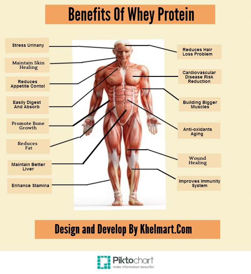 เวย์โปรตีน (Whey Protein)