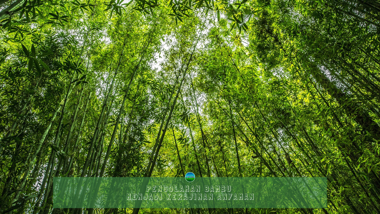 Pengolahan Bambu Menjadi Kerajinan Anyaman