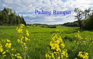 870+ Gambar Hewan Yang Hidup Di Padang Rumput Terbaru
