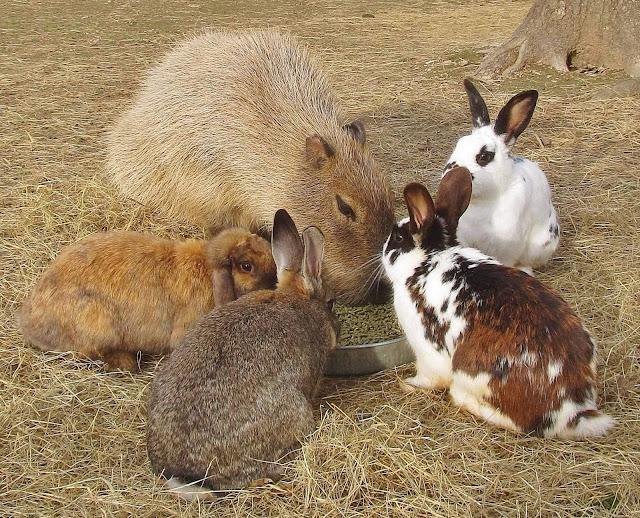 Okunoshima (Nhật Bản) là thiên đường thỏ ở Nhật với số lượng lên tới hàng trăm con. Nhiều giả thuyết được đưa ra về sự tồn tại của thỏ trên đảo. Có người cho rằng, thỏ được đưa đến đảo Okunoshima từ Thế chiến thứ 2 làm vật thử nghiệm vũ khí hóa học của quân đội. Luồng ý kiến khác cho rằng, kể từ khi hòn đảo phát triển du lịch, người dân đã nuôi thỏ nhằm thu hút du khách và ngày nay chúng sinh sôi với số lượng lớn.