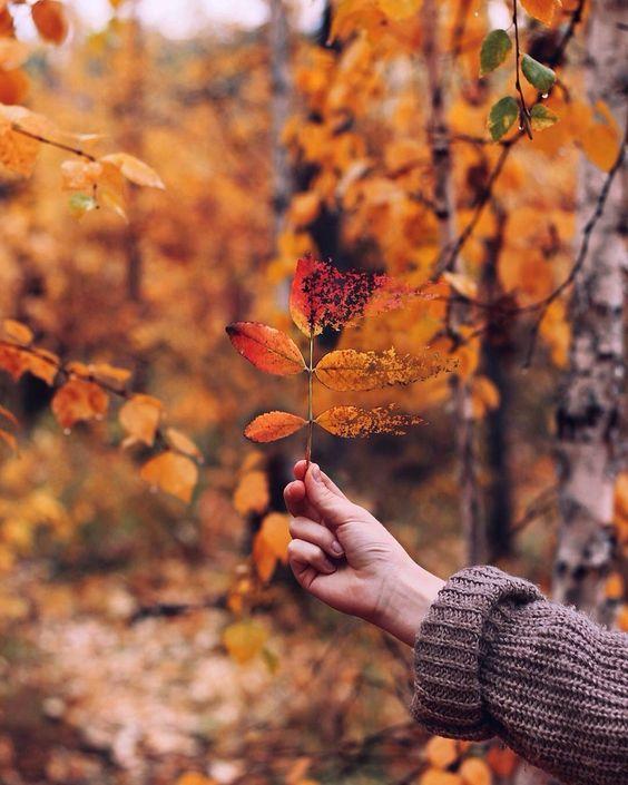 PUNTXET Hello Autumn
