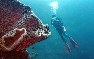 Dive site in Tomini Bay
